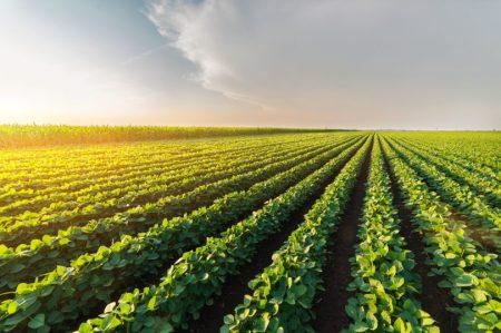 champ-plantation-soja-renseignementeconomique-810x539